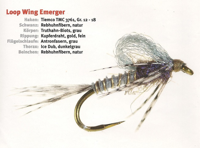 loop_wing_emerger_klein.jpg